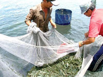 Trung Quốc nhập khẩu trở lại tôm sống từ Việt Nam